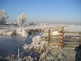 polder in de winter